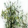 bamboo_olio su tela_35x50