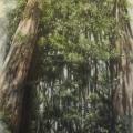 sequoie_olio su tela_40x80
